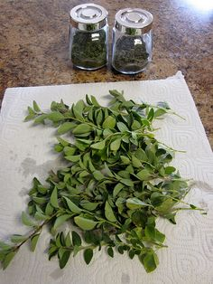 How to dry fresh herbs for the winter  Very easy