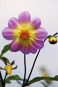 Purple and Yellow Petal Flower