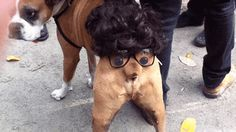Animals + costumes = the time for humiliation is here.
