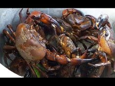 Crab Fishing | Mud Crabs Catching | Crabs Deep hole Fishing | Mudcrabs catch tips n Cook - (More info on: https://1-W-W.COM/fishing/crab-fishing-mud-crabs-catching-crabs-deep-hole-fishing-mudcrabs-catch-tips-n-cook/)