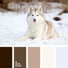 wood color palettes with color ideas for decoration your house, wedding, hair or even nails. Colour Pallette, Colour Schemes, Color Combos, Wood Colors, Paint Colors, Pastel Palette, Color Balance, Colour Board, Winter Colors