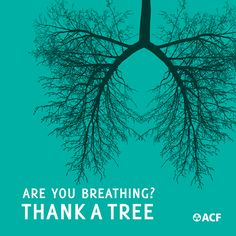 Save old growth forests.  Plant a tree. HUG a tree and say thanks!!