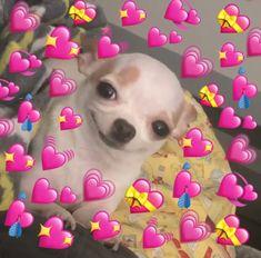 New memes heart emoji ideas - Modern Animal Memes, Funny Animals, Cute Animals, New Memes, Funny Memes, Meme Meme, Memes Amor, Sapo Meme, Memes Lindos