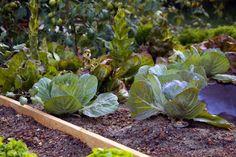 Improve Your Garden Soil - Save Money, Eat Healthy