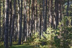 The woods at Sandhamn (an island in the Sthlm archipelago), Sweden. Photo by Rosanna Gunnarsson