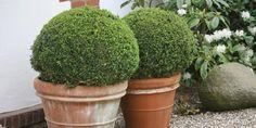 Twenty Evergreen Shrubs For Non-Stop Color | HGTV Evergreen Flowering Shrubs, Evergreen Landscape, Evergreen Garden, Trees And Shrubs, Landscape Borders, Landscape Design, Shade Shrubs, Shade Plants, Garden Design
