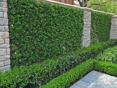 Plants for Dallas - Your Source for the Best Landscape Plant Information for the Dallas-Ft. Worth MetroplexBest Vines for Dallas, Texas — Wall Climbing Plants, Climbing Vines, Vine Fence, Trellis Fence, Lady Banks Rose, Creepers Plants, Fast Growing Vines, Pool Landscape Design, Garden Design