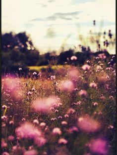 Flower field background.