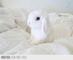 OMGPaw - white bunny