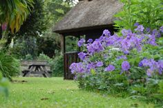 The play house with the 'Johnston Blue' geraniums in full bloom in May.