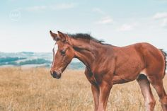 """Foal by horse photographer """"Tierlicht"""" Horse Photography, More Pictures, Horses, Outdoor, Animals, Pictures, Animales, Outdoors, Animaux"""