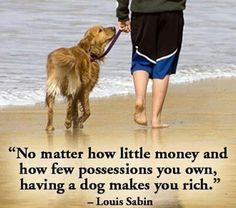 """My Heart Belongs to a Golden :)  No truer words spoken... Golden Love is """"Forever"""" and a few Labs too...and a collie....."""