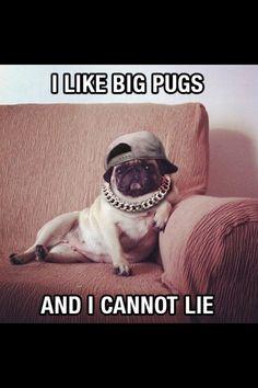 Dressy Pug