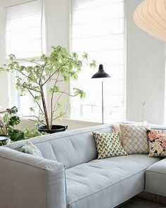 Does anyone know what that big plant is? I'm really feeling the light green leaves 💚💚 + those cushions! Via @milou_nieuwenhuis