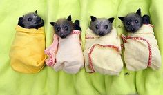 Baby Bat Burrito, awww >.< I knw most ppl think their creapy but i think their cute!!