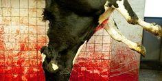 Petition · Bundeskanzlerin Angela Merkel, People for the Ethical Treatment of Animals (PETA), Deutsches Tierschutzbüro: Against the construction of a Halal slaughterhouse in Neuss Germany · Change.org