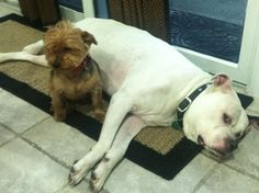 Tough day for the boys!  (Theresa Caputo's dogs)