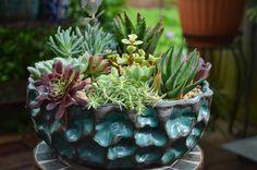 Beautiful succulent arrangement by Pat Enderly in a Susan Aach pot.