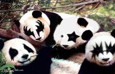 Kiss, the panda band