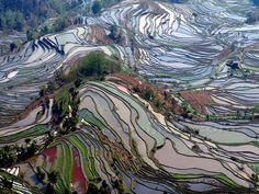 South Sulawesi terraced rice fields | Yuanyang Rice Terraces 元阳梯田