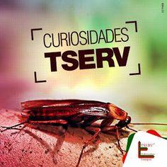 TUDO SOBRE INSETOS: CURIOSIDADES TSERV