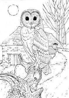 Barn Owl coloring page from Owls category. Select from 24652 ...