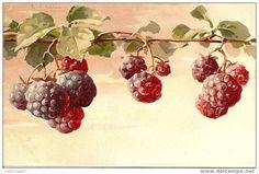 E pra encerrar esta série da Catherine Klein, que tal uma boa olhada nas maravilhosas frutas?  Com carinho,   Lilian