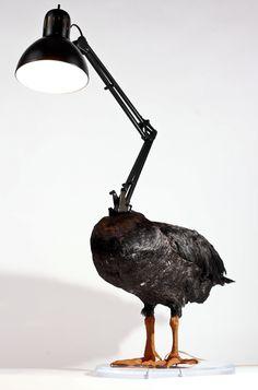 un-canard-empaille-en-lampe-par-Sebastian-Errazuriz-2 taxidermie: un canard empaillé en lampe par Sebastian Errazuriz