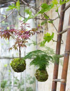 Comment faire un kokedama suspendu - Marie Claire Garden Art, Garden Plants, House Plants, Garden Design, String Garden, Hanging Plants, Indoor Plants, Planter Beds, Chicken Garden