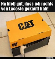 Quatsch Echt Jetzt Katzen Fakten Witzige Bilder Spruche Suse Fotos Lustige