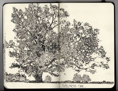 Sketch Book Ian Sidaway Fine Line tree sketch art Sketchbook Drawings, Artist Sketchbook, Drawing Sketches, Art Drawings, Sketch Art, Sketching, Sketch Books, Moleskine, Tree Sketches