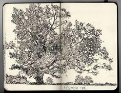 Sketch Book Ian Sidaway Fine Line tree sketch art Artist Journal, Artist Sketchbook, Sketchbook Drawings, Drawing Sketches, Art Drawings, Sketch Art, Sketch Books, Journal Art, Moleskine