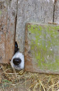 Help... by Sergio Leitao  (cute nose dog pic)