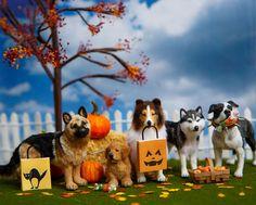 "Happy ""Howl"" ween  1:12 German Shepherd, Golden Retriever Puppy, Collie, Husky, Pitbull OOAK Dollhouse Miniature"