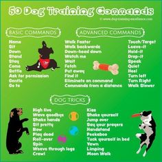 Pet Training - dog training commands, dog obedience commands, list of dog commands This article help us to teach our dogs to bite just exactly the things that he needs to bite Dog Commands Training, Basic Dog Training, Potty Training, Service Dog Training, Training Pads, Puppy Training Tips, Dog Agility Training, Obedience Training For Dogs, Police Dog Training
