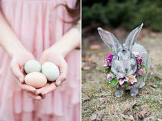 Easter eggs + adorable bunny