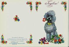 Postcard Dog Poodle Vintage Russian unused by LucyMarket on Etsy, $2.99