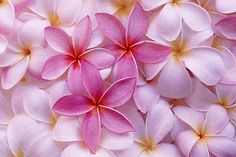 Wow - Frangipani - Plumeria's ~ What ever you call it...No one can imitate the fragrance the Creator made of this flower or any other flower here on earth!
