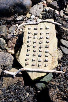 Scotland Loch Fyne Shell Sculpture by Julia Brooklyn  | Flickr - Photo Sharing!