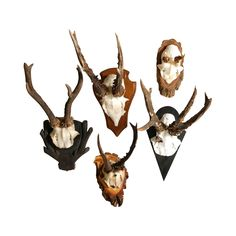 Handsomely worn, this decorative plaque is sure to add some true character to any rustic, country-chic, or sophisticated contemporary space. Obtained from Germany's Black Forrest, each Vintage Antler H...  Find the Vintage Antler Hunting Trophy, as seen in the Vintage Pied-à-Terre in Santa Monica Collection at http://dotandbo.com/collections/vintage-pied-a-terre-in-santa-monica?utm_source=pinterest&utm_medium=organic&db_sku=112143