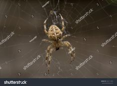 Spider eating a fly on his web Free Spider, Spider Fly, Technology Logo, Photo Library, Insects, Photo Editing, Royalty Free Stock Photos, Logo Design