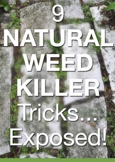The Truth About Natural Weed Killer Exposed, Salt, vinegar, cornmeal, hot water. I think what this guy says should be considered. thanks jannine paulson for linking this.