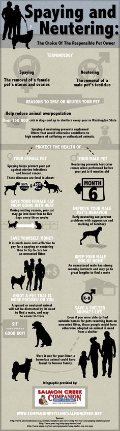 Spaying And Neutering - The Choice Of The Responsible Pet Owner