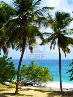 Stock Photo - Carribean Sea and Palmtrees in Martinique