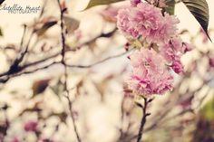 Beautiful flowers in a Japanese Garden!