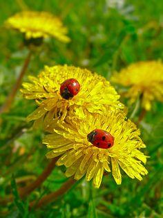 ⊙■ Ladybug ■⊙■■ℒℴvℯlyღ