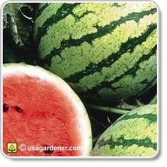 Melons & Watermelons - growing Melons - how to grow Melons