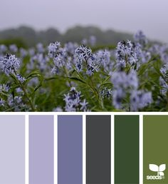 Lilac Vs Lavender Color Lilac Is A Warmer Purple Color