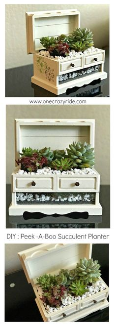 I'll show you how I transformed an outdated and broken jewelry box into a beautiful peek-a-boo succulent planter. It's my second thrift store swap reveal!