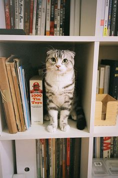 puss in books!